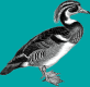 DocBook duck logo